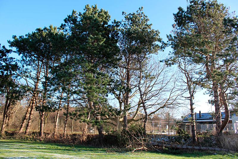 Nykøbing renseanlæg træer